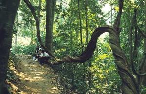 Park national de Cuc Phuong