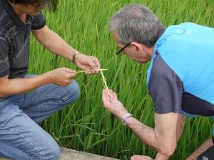 Decouvrir les rizieres!!!