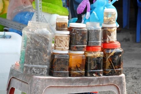 Marche d'insectes au Vietnam_12