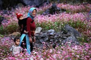 fleurs au vietnam