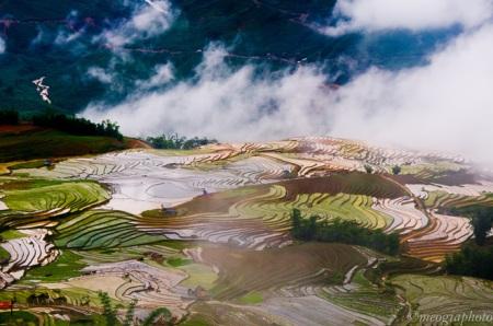 rizieres-en-terrasses-a-Y-Ty3