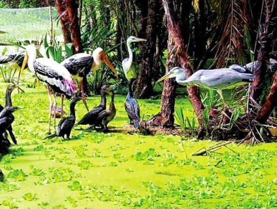 Gao Giong oiseaux rares