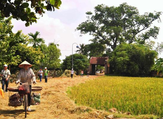 duong lam en pleine campagne de riz