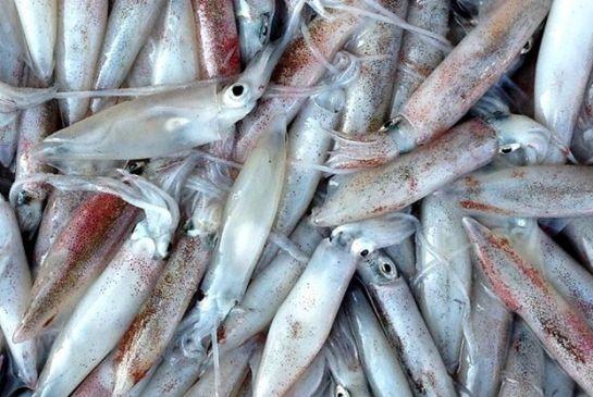5 choses interessantes sur vietnam oeufs de calamar