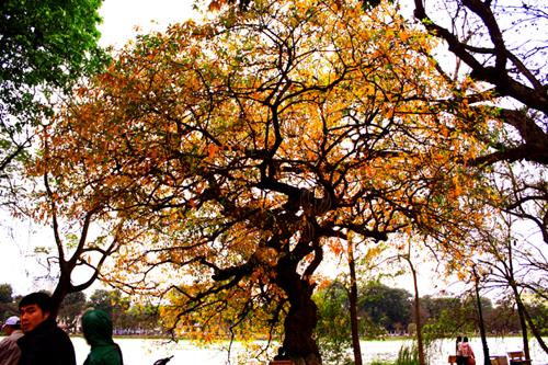 arbre hanoi 1
