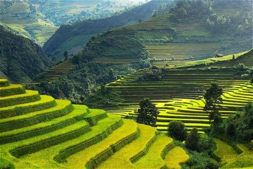 yen bai riziere en terrasse