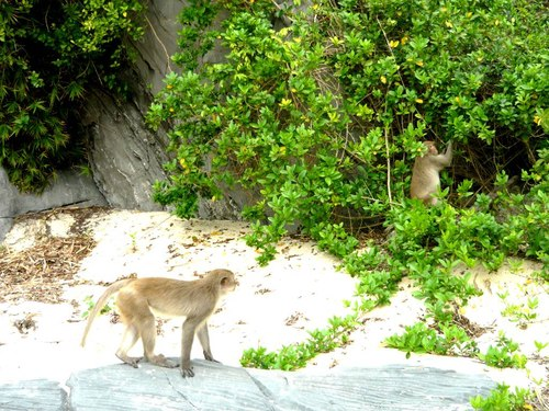baie lan ha ile des singes