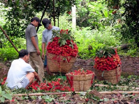 visiter delta du mekong jardin