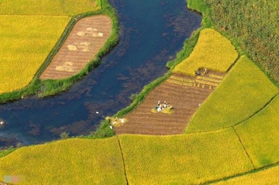 nord vietnam rizieres de bac son.jpg