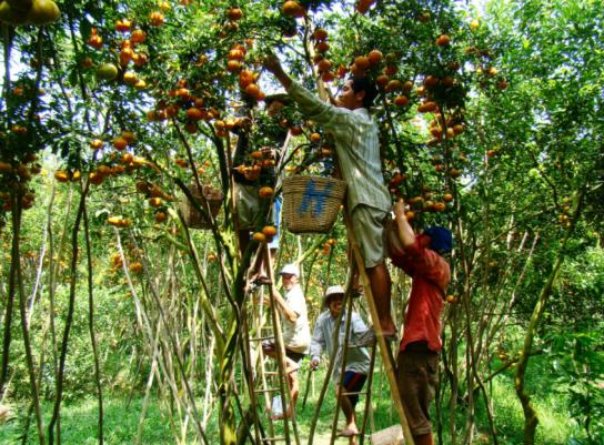 ben tre delta du mekong jardin fruitier.png