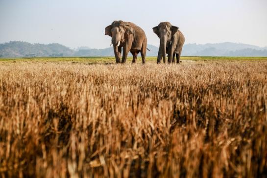 visite lac de lak elephants libres.jpg