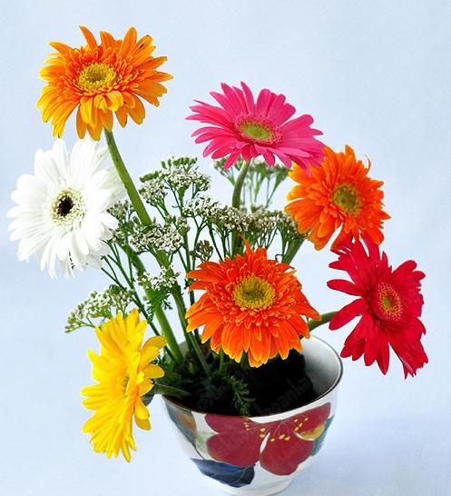 fleurs de la fete du tet gerbera.jpg