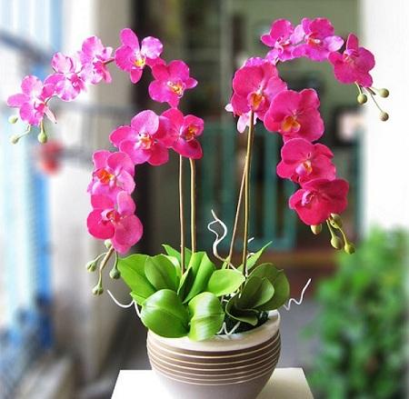 fleurs de la fete du tet orchidees.jpg