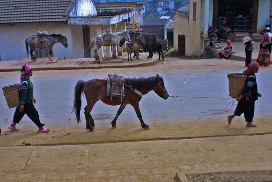 visite marches ethniques nord vietnam chevaux.jpg