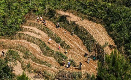 visiter ha giang au printemps semis.jpeg