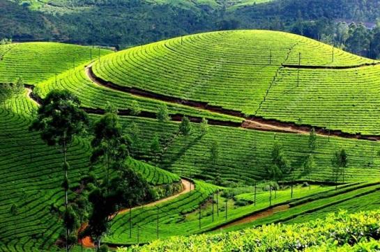 beaux plateaux vietnam moc chau the.jpg